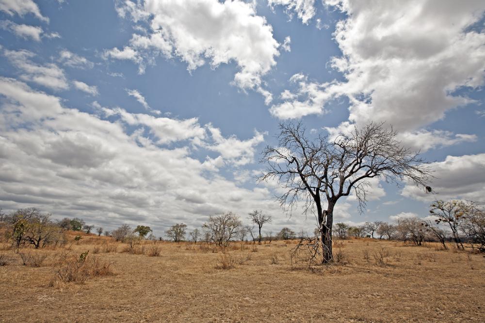 Tanzania Landscape, Lukula Selous