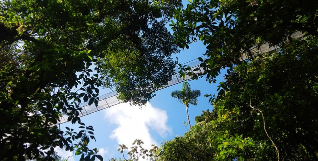 Arenal Hanging Bridges