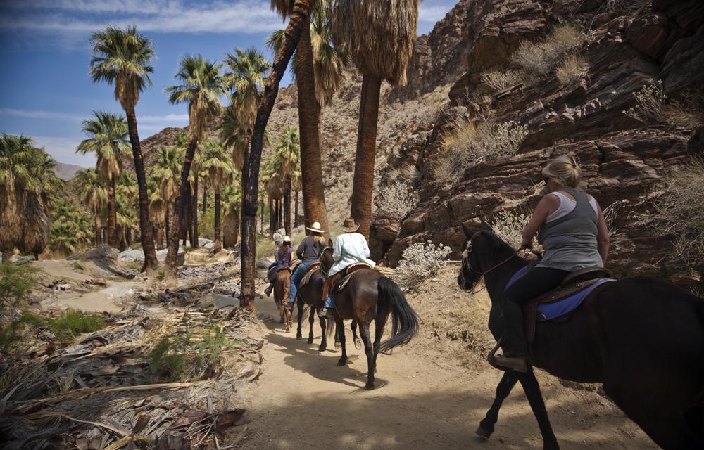 Palm Springs – Palm Canyon Hike
