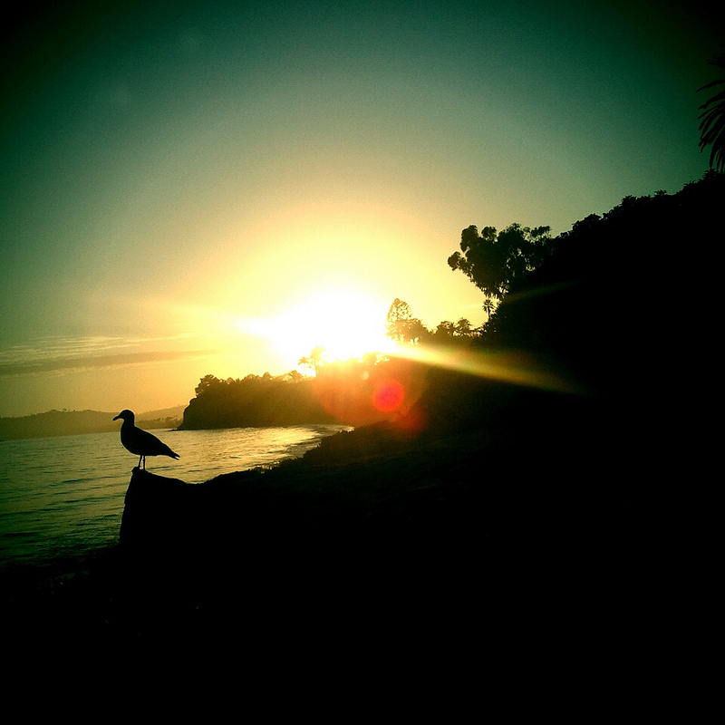 santa-barbara-sunset-bird-butterfly-beach
