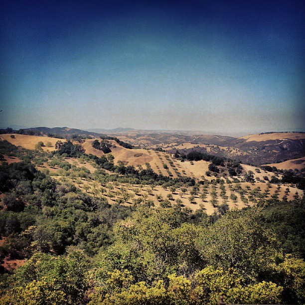 Daou Winery, Paso Robles
