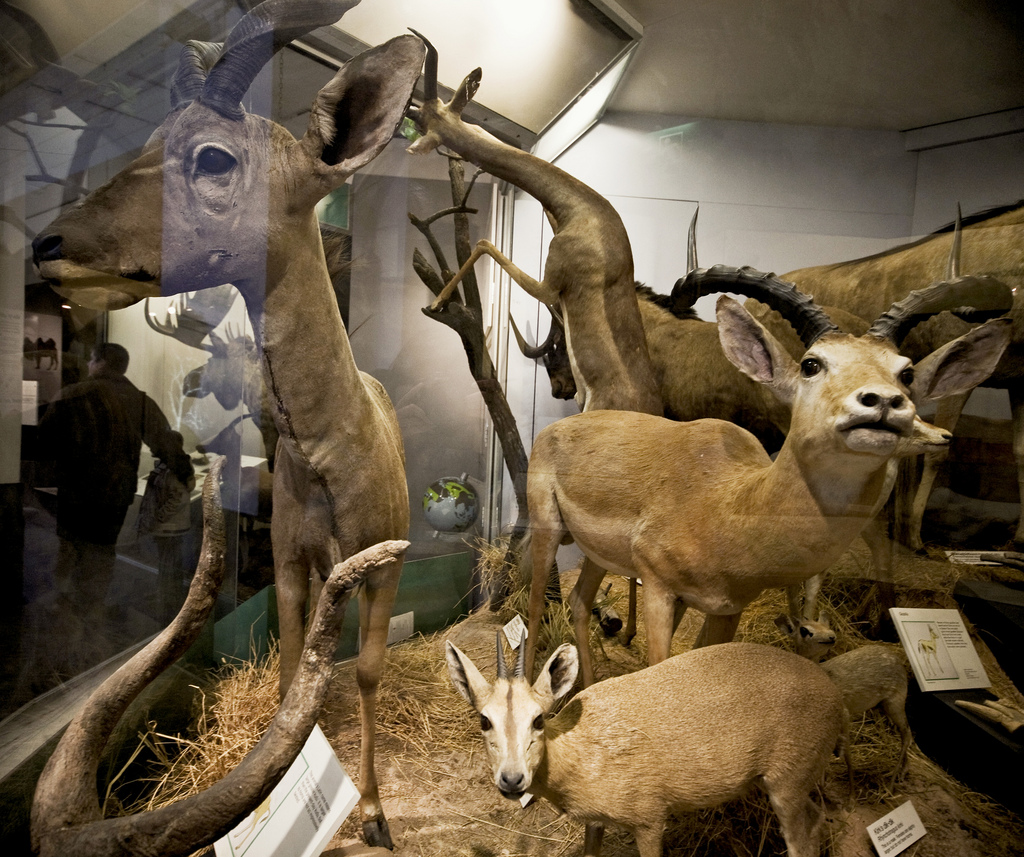london-animals-natural-history