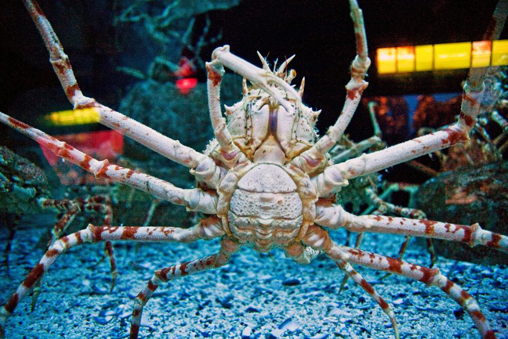 Aquarium City Sightseeing Cape Town, South Africa
