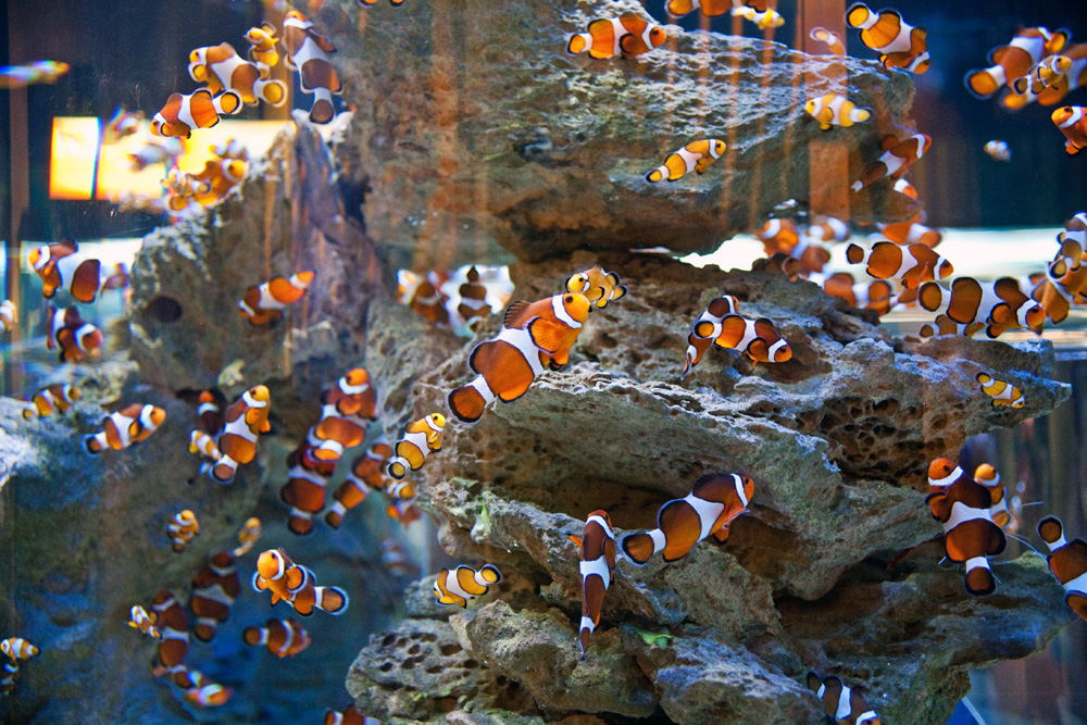 Aquarium City Sightseeing Cape Town, South Africa