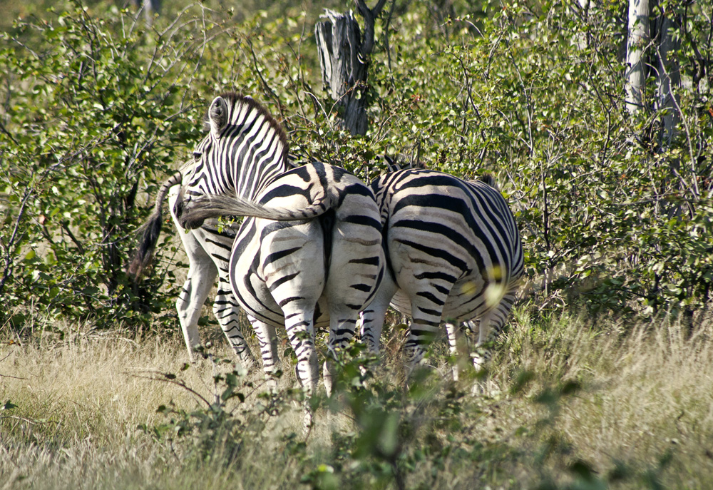 Vumbura Plains, Botswana Safari Camp