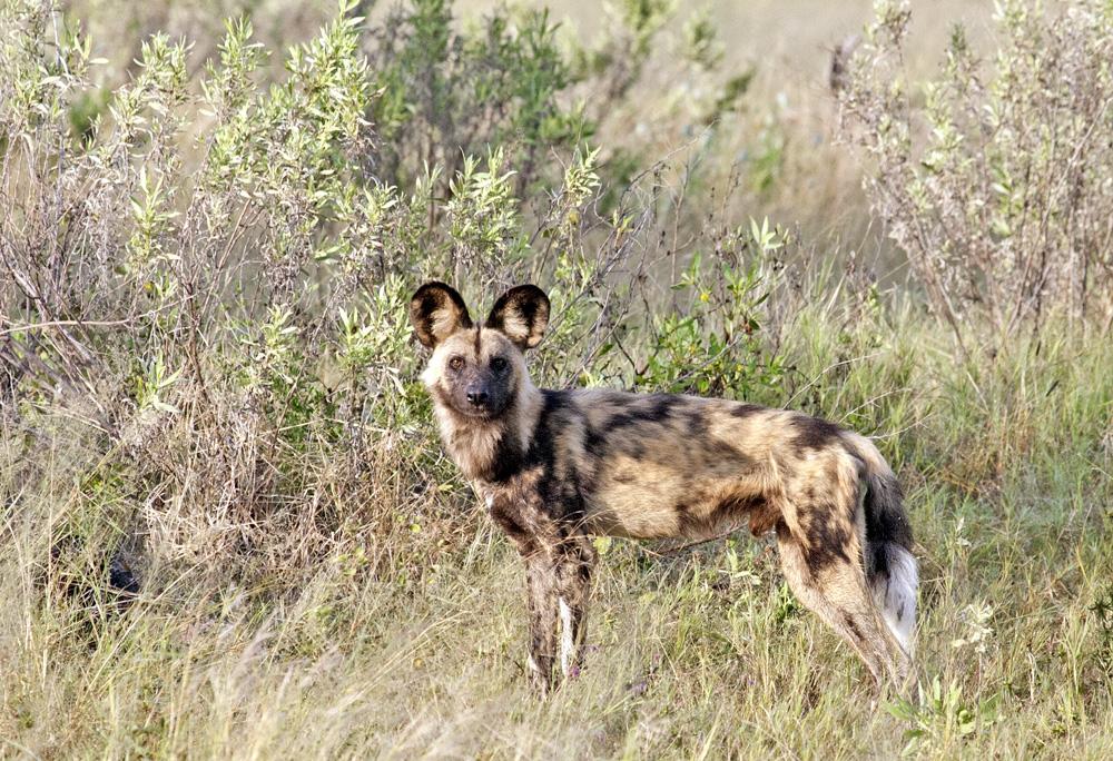 Zarafa, Botswana Safari Camp