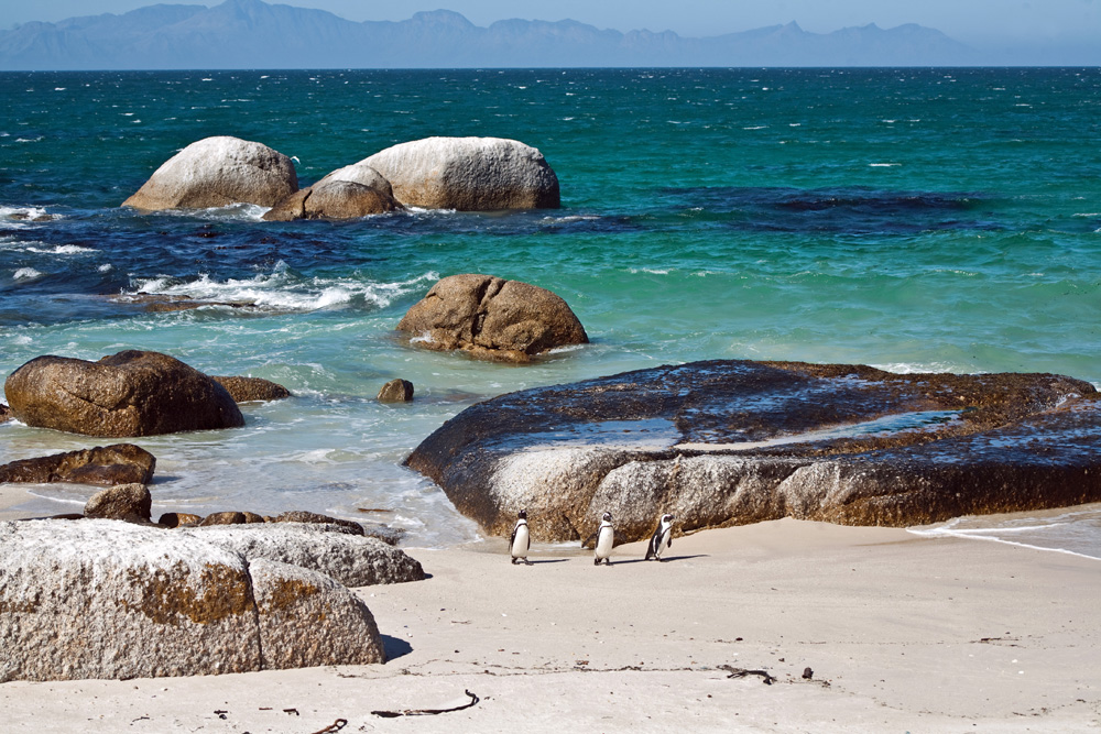 False Bay Coastal Tour