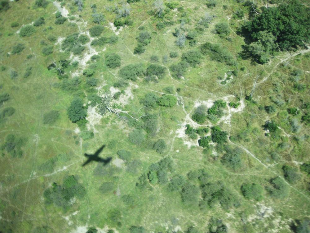 Vumbura Plains Plane Shadow