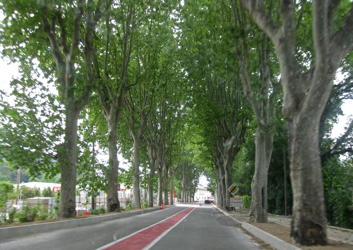 aix-en-provence-trees