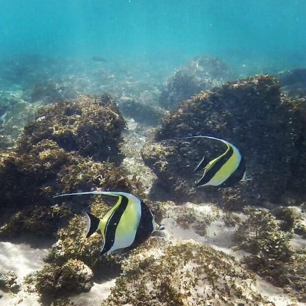 clownfish-maui-gopro-snorkeling