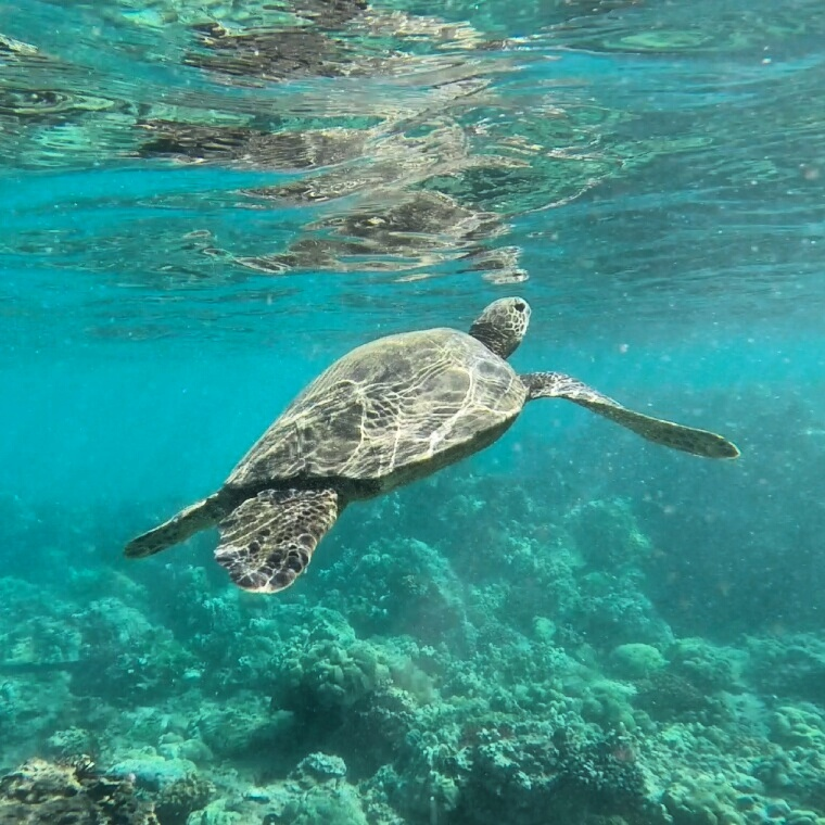 Snorkeling With Turtles On Maui – Day 3