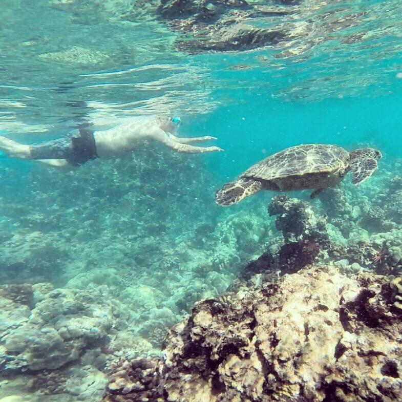 mik-snorkeling-turtle-maui