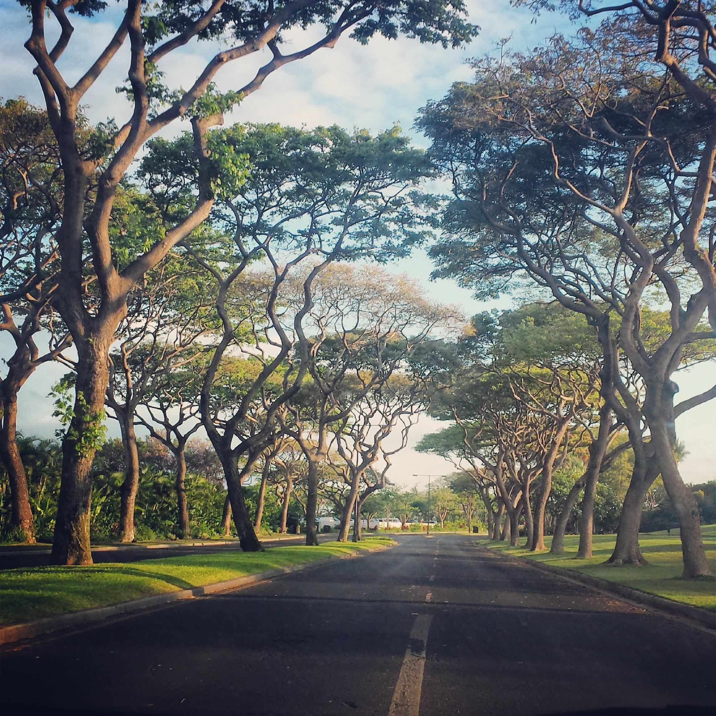 wailea-tree-lined-road