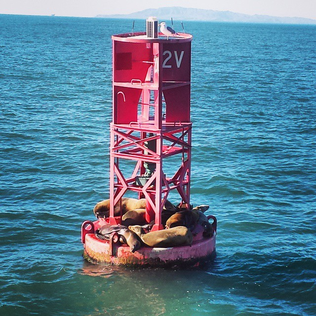 ventura-harbor-pinniped-buoy