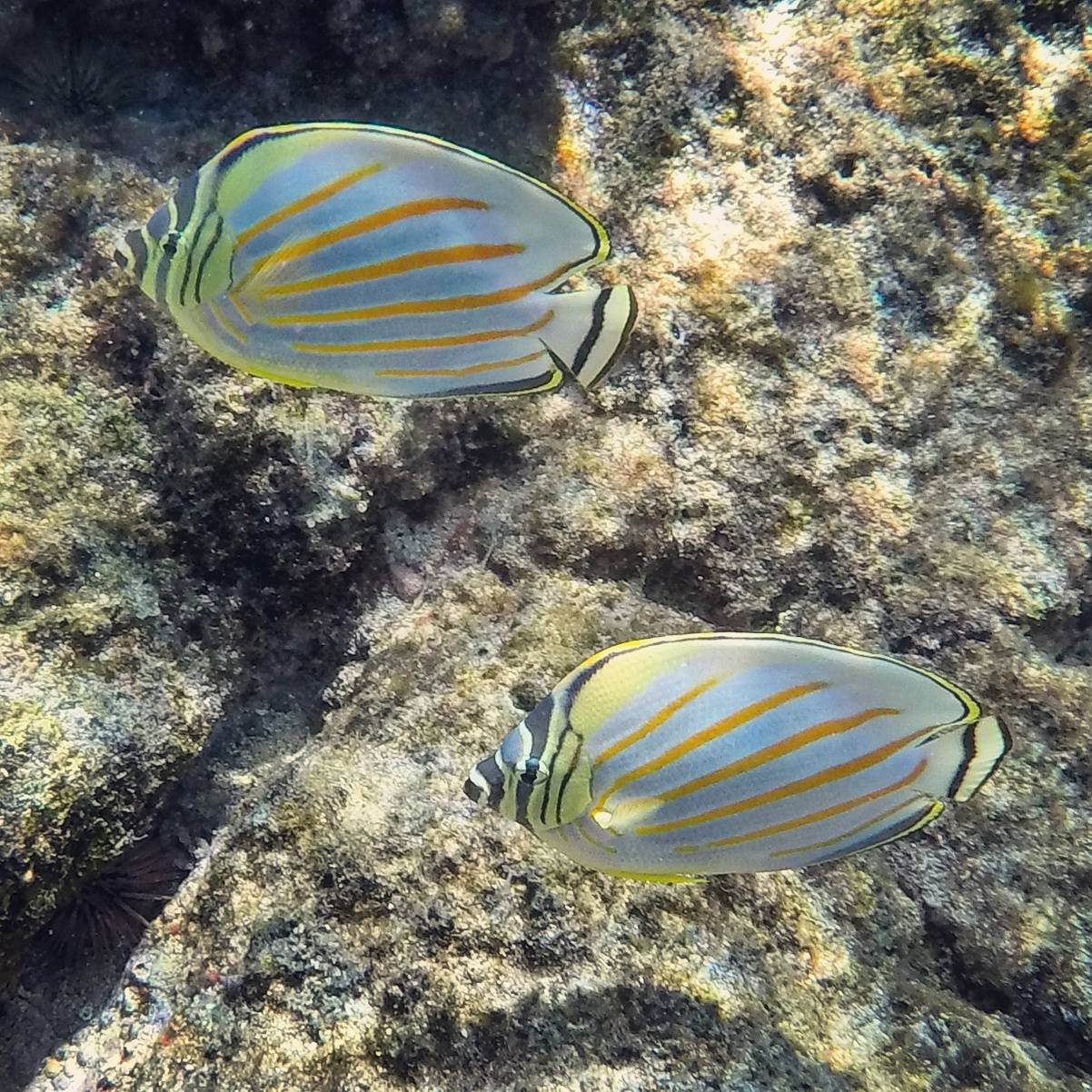 Snorkeling At Two Step
