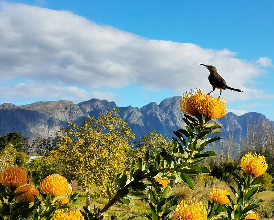 South-africa-airbnb-franschhoek-1