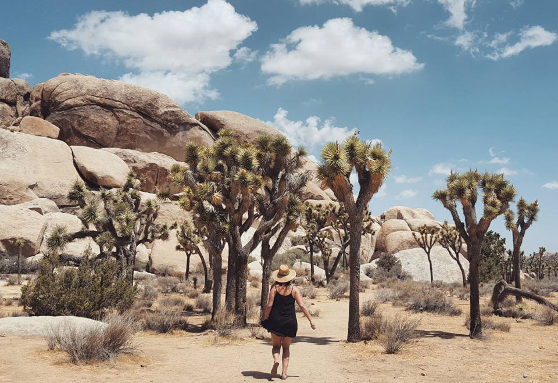 kelly-lane-joshua-tree
