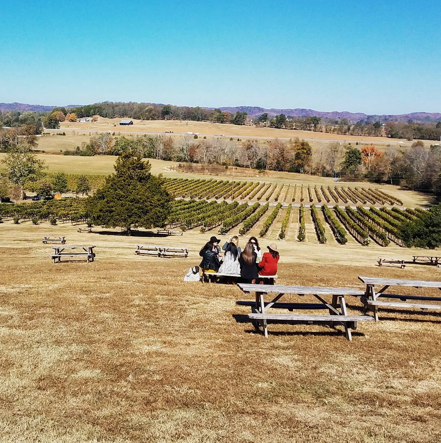 Arrington-vineyards-tennessee
