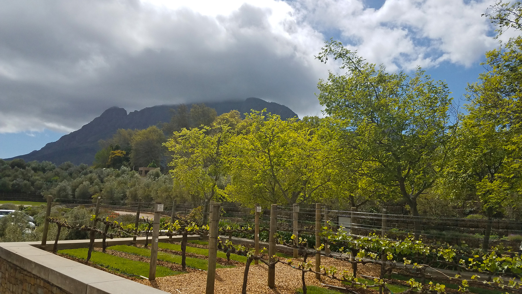 Tokara-wine-estate-stellenbosch-9