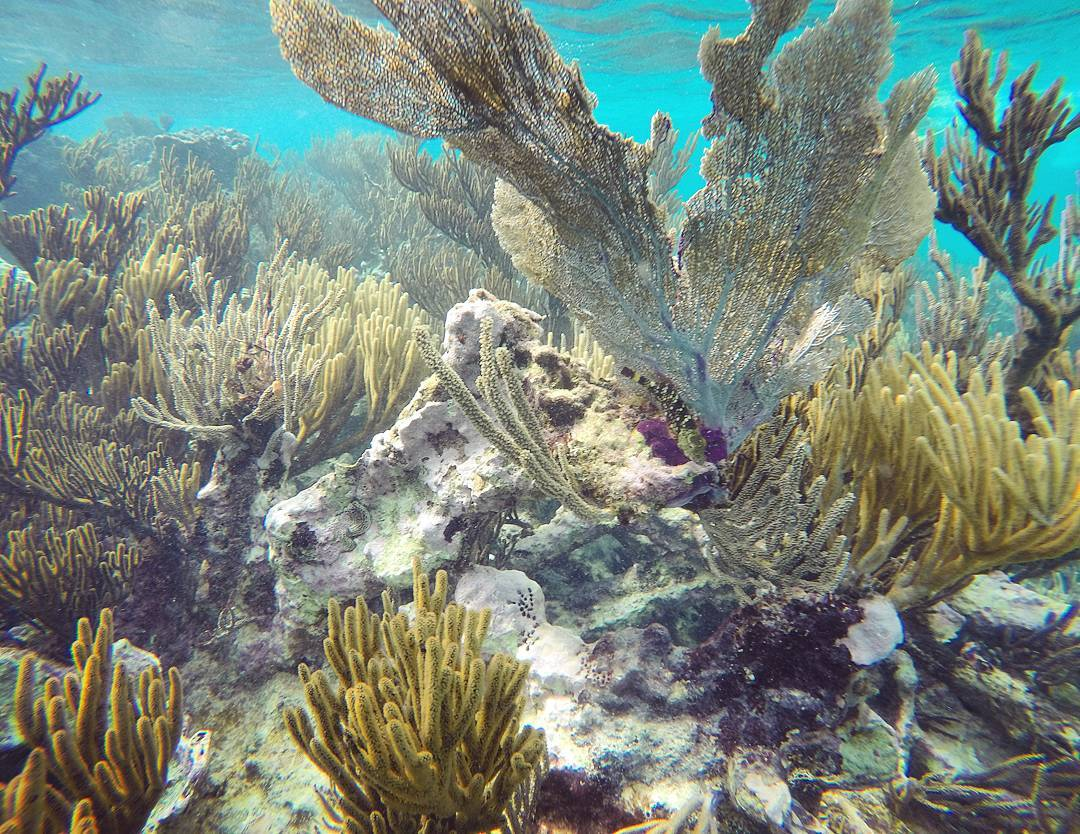 Mexi-divers-tulum-mexico-snorkeling-10