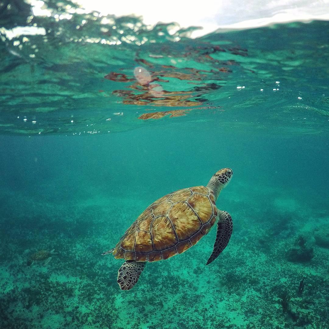 Mexi-divers-tulum-mexico-snorkeling-7