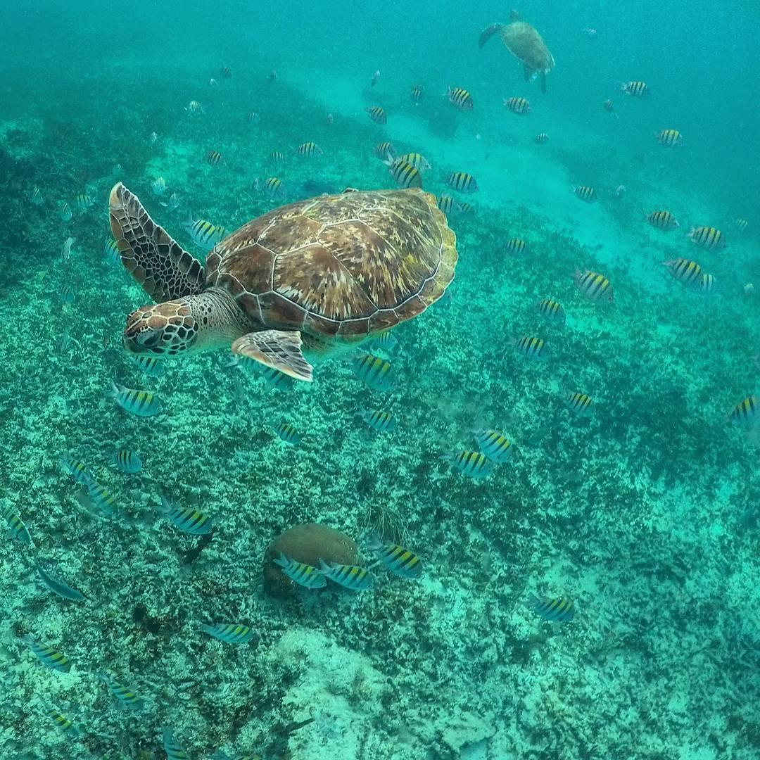 Mexi-divers-tulum-mexico-snorkeling-8