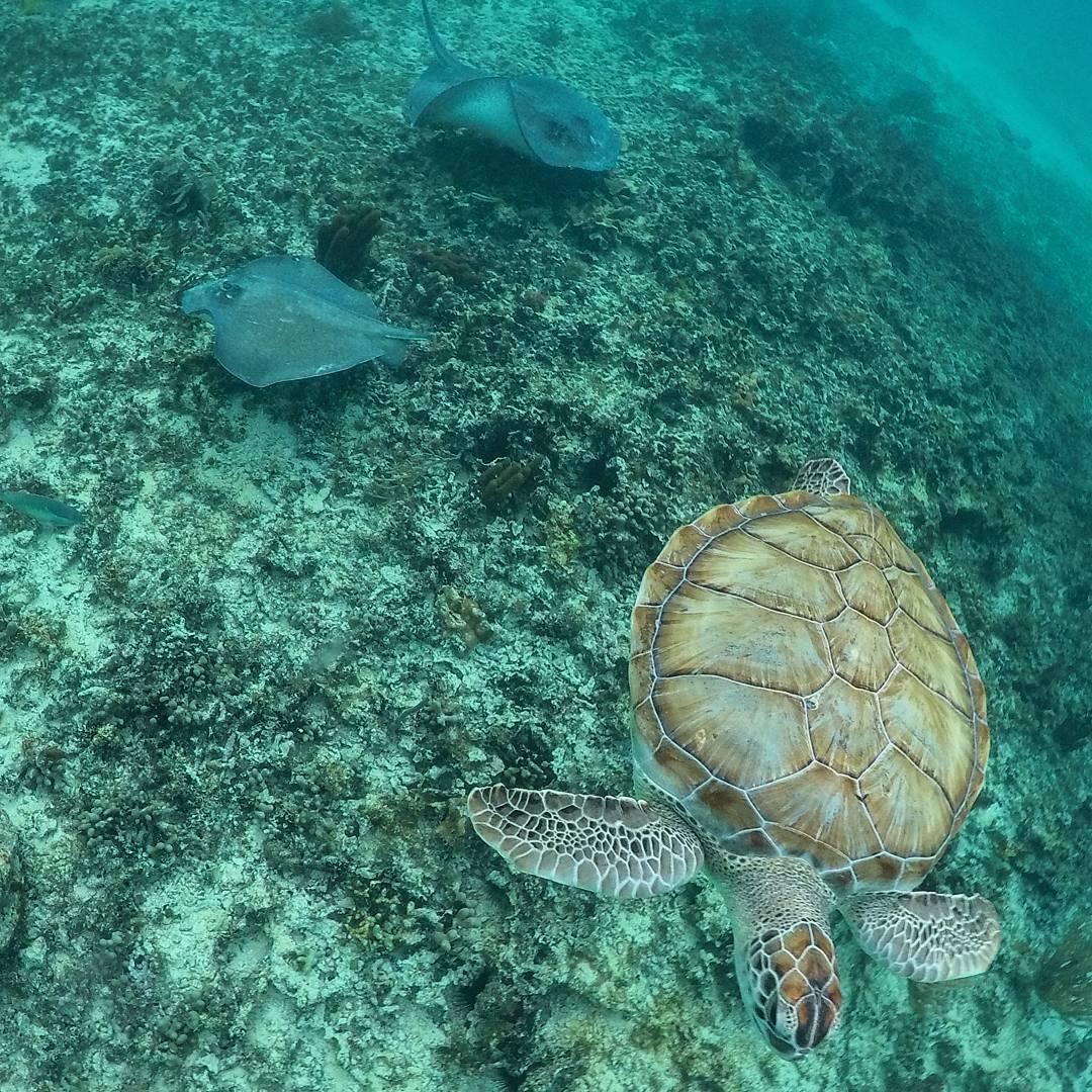 Mexi-divers-tulum-mexico-snorkeling-9