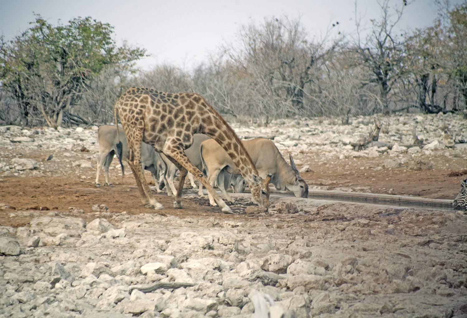 Etosha-nationa-park-safari-watering-hole