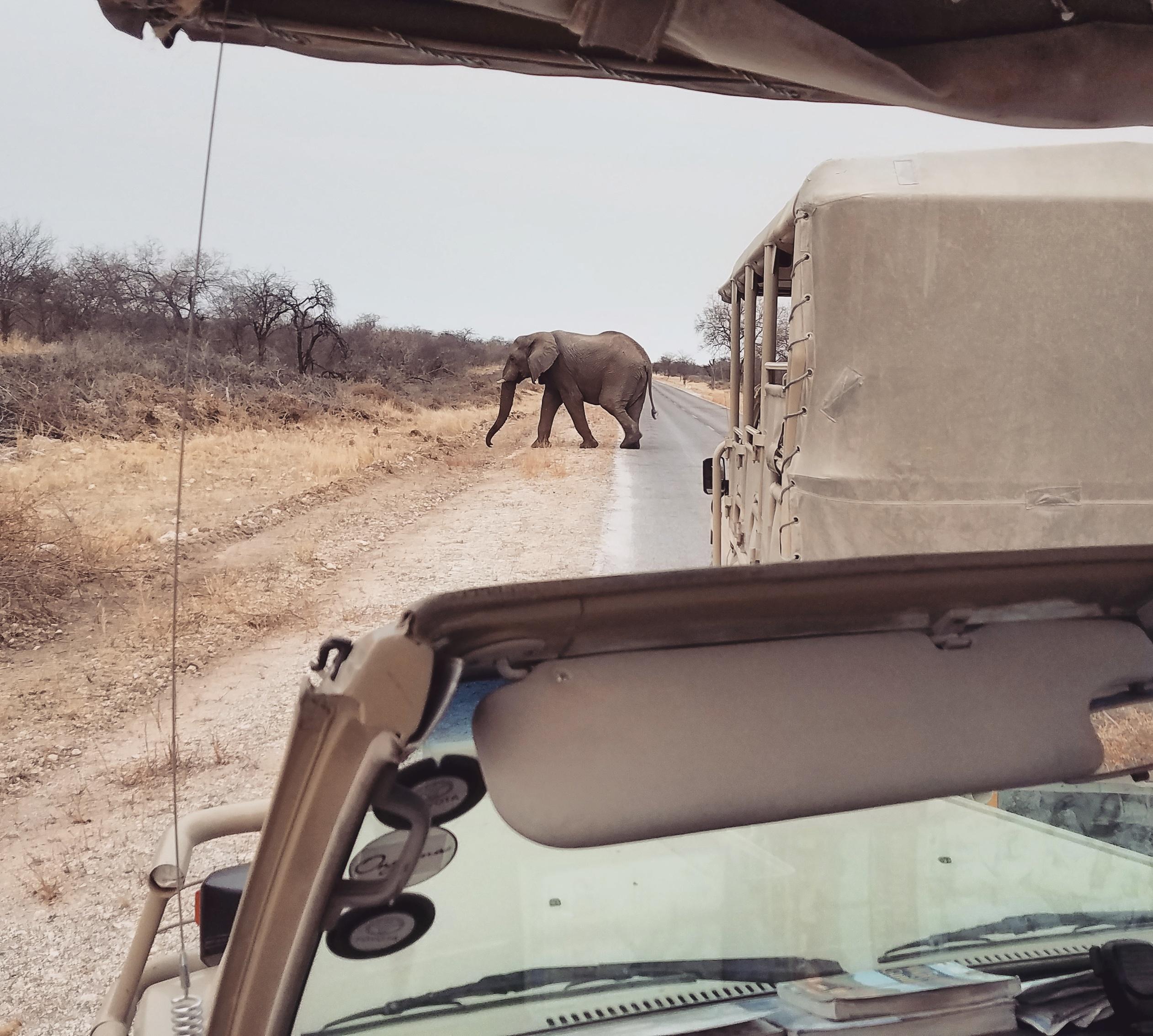 Etosha-national-park-namibia-11