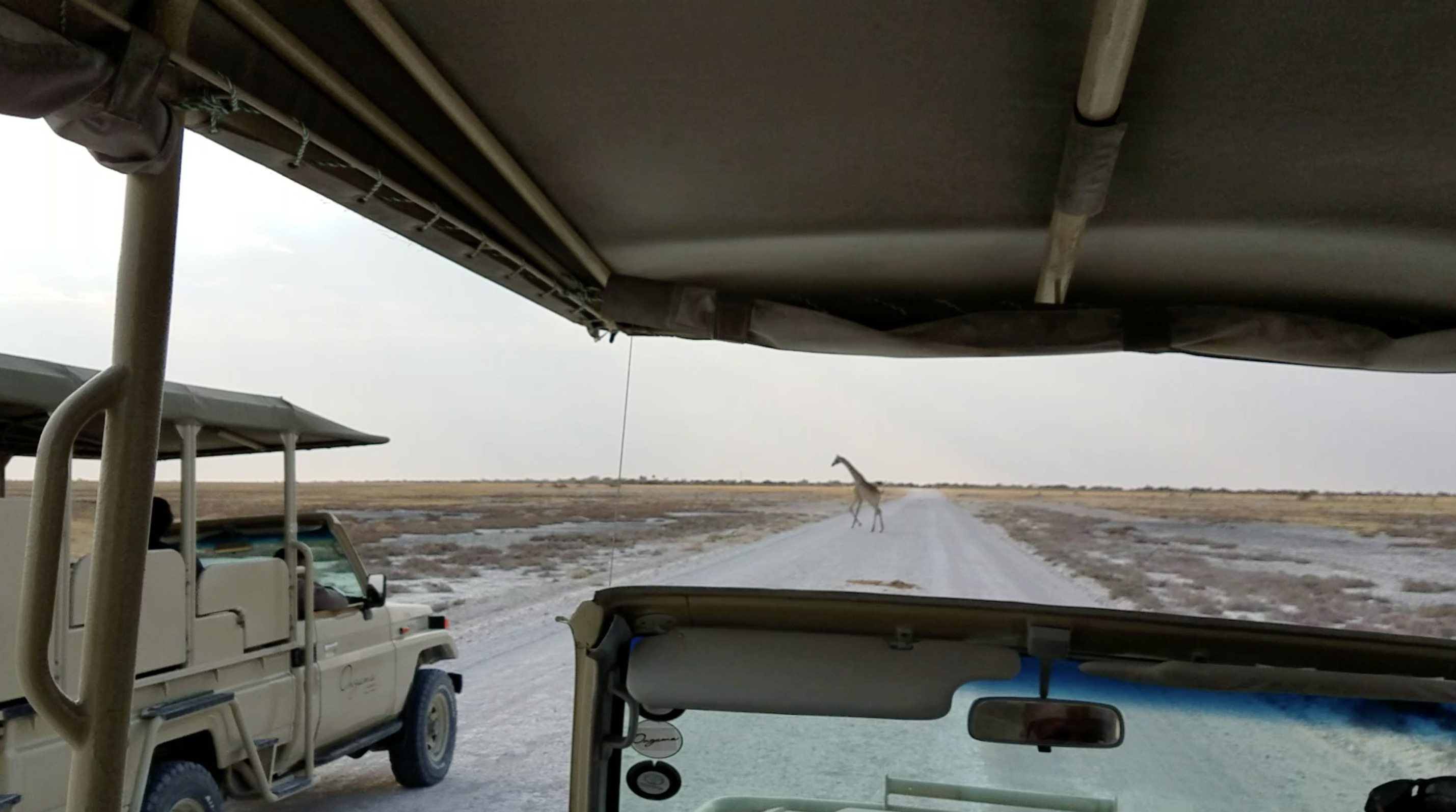 giraffe-namibia-video-screenshot