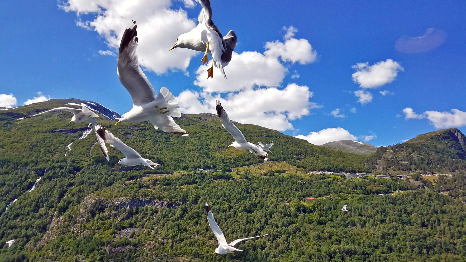 Birds-ferry