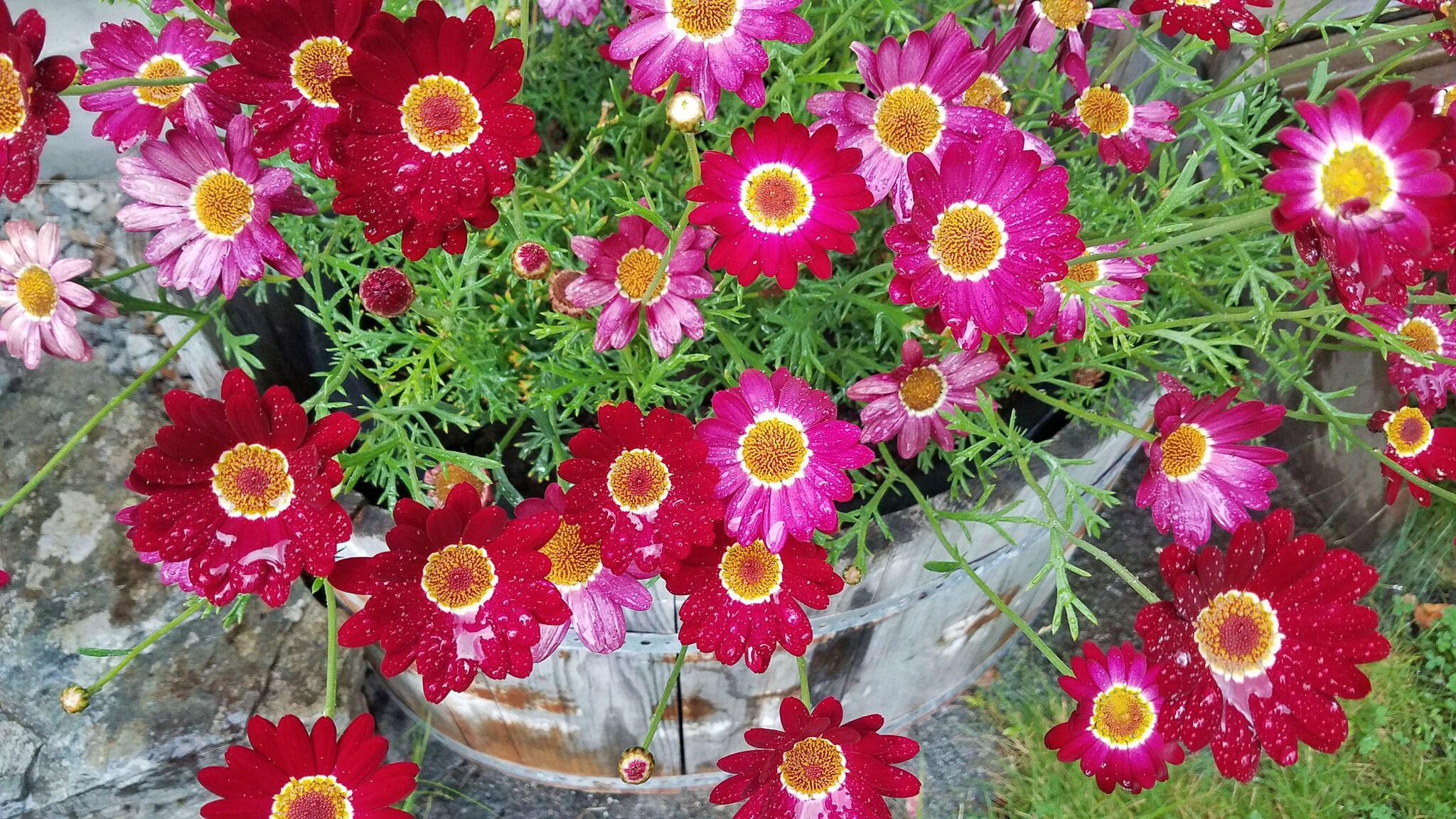 Ullensvang-gjesteheim-flowers